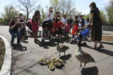 The goose family including eight babies was a crowd pleaser at the Denver Zoo at 23rd St. in...