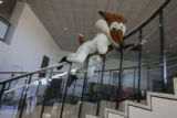 Caught....the Sky Sox minor league baseball team mascot tried to avoid the steps and slide down...