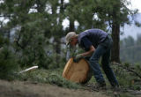 Ryan Olbrich (cq), 23, of Lam Tree Service, rolls part of a tree up the hill that was cut down...