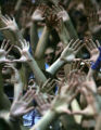 Ralston Valley Mustangs students make the sign of a basketball hoop during a free-throw attempt by...
