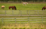 GATEWAY, Colo., photo taken July 16, 2004 --Horses on the ranch of John Hendricks owner of the...