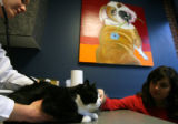 DLM1798  Jonette Gonzales, 32, watches as her cat, Jesse, is examined at a veterinary clinic in...