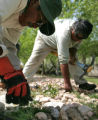 Jesus Reyes (cq) left, from Guatemala  and Victor Aguilar (cq) from Mexico pick weeds on the...
