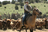 Marty lassos a calf to bring it down to be branded at Muddy Valley Ranch 30 miles south of La...