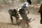 Kenneth Lewis and cousin Ryan have a roped calf brought down with dust flying at Muddy Valley...