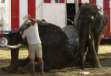 (Loveland, Colo., August 24, 2004) Elephant Supervisor Joe Frisco applies skin moisturizer on an...