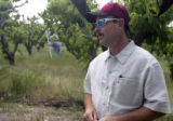 PHOTO BY CHRISTOPHER TOMLINSON--Bruce Talbott(cq)orchard man for Talbott Farms in one of the peach...