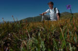 (8/9/04, Niwot Ridge, CO)  Bill Bowman, director of the CU Mountain Research Station on Niwot...