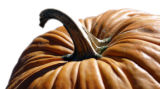 Shot on 10/18/2005 in Lafayette- Cover of a pumpkin for Lisa Ryckman's Fitness Spotlight will...