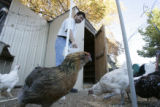 DM0008     Rich Vigil feeds his the chickens on his family's small farm, known as Double Vig Farm,...