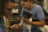 Liz Peach, left, and Amanda Griffin, (cq both), (both are Certified Veterinary Technicians) get...