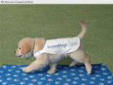 PRN5 - Puppy Chase presenting new logo.  (PRNewsFoto/Leader Dogs for the Blind)