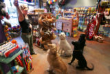 Wendie Greenlaw (cq), manager of Colorado Canines, an all-natural dog and cat store, gives the...