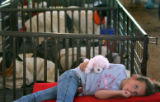 Madison Lambert (cq), 6, of Lewis, sucks her thumb as she rests next to a sheep pen in the...