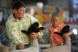 Colton Hardy (cq), of Parker, shows his sheep on the second day of the Colorado State Fair in...