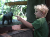 Aden McMahan (cq), age three, watches the gorilla troupe that will be leaving the Denver Zoo soon...