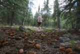 Charlotte Trego (cq) walks a pine-cone covered trail in her 30-Mile Resort, Tuesday afternoon,...