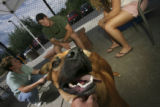 Rocky is introduced by Valerie Wolfe, Animal Welfare Associate, to T.K. Connor and Brittany...