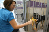 Lauren Varner,cq, of Denver plays with a dog at the Boulder Humane Society, Wednesday Aug. 29,...