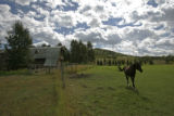 0229 A horse walks in a pasture near a hay barn on the Hala Ranch which he has listed for $135...