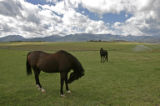 0246 Horses roam in a pasture on the Hala Ranch which he has listed for $135 million in Pitkin...