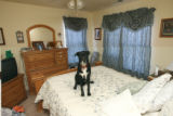 Susan Tatum's black lab mix named Lucky in her bedroom of her duplex at 200 Cardinal Way, Unit D...