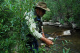 Paul Downing, of Estes Park, stalks native cutthroat trout at Trapper Creek on the Roan. He...