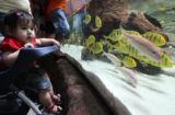 10 month-old Mia Caldino (cq) looks at a variety of fish at one of the many fish tanks at The...