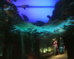 The Denver Aquarium attracts thousands of visitors year round. The 107,000 square foot (9940 m?)...
