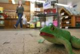 DLM3516  A frog motion detector croaks as people enter and exit the Rocky Mountain Seed Company...