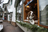 Isis sits in the  window of Moose's Caboose, Vail Village, Monday afternoon, December 3, 2007,...