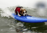 SH07F245SUPERDOG June 25, 2007 -- Buddy floats off the Promenade. (SHNS photo by Rob Varela /...