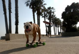 SH07F247SUPERDOG June 25, 2007 -- Tillman skateboards along the Promenade at Surfer's Point. (SHNS...