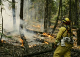 CABM107 - Derek Schepens,  a firefighter with the Sonoma Lake-Napa CDF, works a backfire of the...