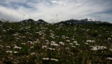 A group of Trailing Daisy grow in Morane Park, in Rocky Mount National Park, Wednesday morning,...