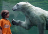 CNU103 - Erik watches a polar bear swimming in his pool at the zoo in Nuremberg, southern Germany,...