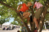 MJM329  Anna Martin (cq), 10, center, of Evergreen, Colo. climbs a tree in the shade Friday July...