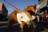 Bernie the Dog (cq) barks on Blake Street near Coors Field in Denver, Colo., before Game 4 of the...