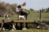 (Denver, Colo., September 14, 2004)  Jill Breen runs Adventure Hounds, a new service in which she...