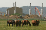 MJM346 Horses graze in a field in front of a natural gas facility Friday August, 3, 2007 outside...