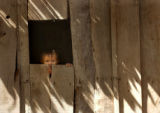 Kampong Chnang Province, Cambodia.  November 5, 2003.   A young boy peeks out of a window of his...