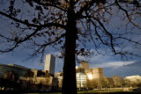 DM0460   A tree grows in the southwest section of Civic Center Park near where a new cultural...