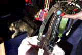 At C.B. Paws, VP of Belly Rubbing, Beth Wright, holds some high priced doggie collars that range...