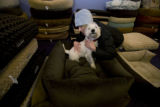 At C.B. Paws there have expensive beds and Bently a westie gets a hug from his owner Stacy Jha...