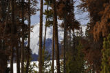 Lodge pole pine trees that have died turn the familiar red around Dillon Reservoir Wednesday...
