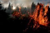 The sun rises a controlled burn of  the Sacred Earth Garden at the denver Botanic Garden Wednesday...