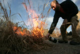 Dan Johnson, Curator of native plants uses a torch to start a controlled burn of Plaines Garden at...