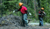 Inmates from the Colorado Department of Corrections removes a bark beetle killed tree from the...