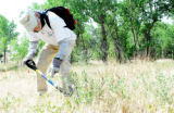 Tom Ledgerwood, of Denver, with the Volunteers for Outdoor Colorado organization, uses a shovel to...