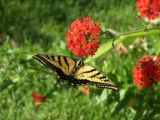 Photographer: Hanna Nichols, Arvada  The plant: ???? at the Butterfly Pavilion  The camera: Canon...